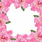 Floral Border - Pink