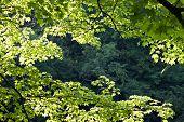 Tree Leaves Background