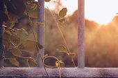 Sunlight Through Beautiful Leaves poster