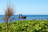 picture of sakhalin  - Seascape ship which has long ago sunk beside coast - JPG