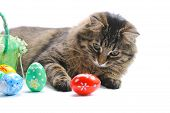 Cat And Easter Eggs
