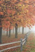 picture of split rail fence  - The heavy fog hides the distant view of the countryside - JPG