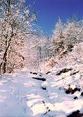 foto of winter scene  - winter path - JPG