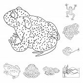 Vector Illustration Of Amphibian And Animal Icon. Collection Of Amphibian And Nature Stock Vector Il poster