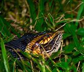 Snake's Breakfast