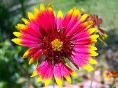 Festive Flower