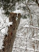 wooden fence post in the snow