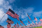 A large group of American flags. Veterans or Memorial day display poster
