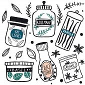 Herbs And Spices Jars Icon Set: Basil, Pepper, Rosemary, Anise, Vanilla, Bay Leaves. Hand Drawn Vect poster