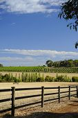 de wijngaard op de heuvel