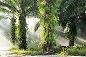 Palm Farm Day Outdoor Fog Light