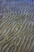 Shore Texture And Curved Line