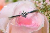 Diamond Ring On Rose