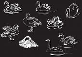illustration with white swan collection isolated on black background