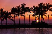 Sunset silhouettes in Big Island Hawaii