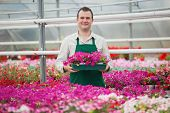 Man holding a box of flowers working in a greenhouse in garden center