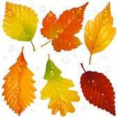 image of birching  - Vector autumn leaf set isolated on white background - JPG