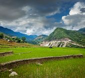 image of rice  - Rice field terraces  - JPG