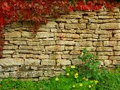 Old, ragged brick wall texture with fall greenery (for background)