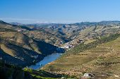 Vineyards In Douro Valley