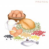 stock photo of nutrients  - Various Kind of Protein Foods to Improve Nutrient Intake and Health Benefits Protein Is One of The Main Types of Nutrients - JPG