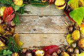 frame with nuts, acorns, chestnuts autumn fruits