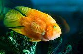 yellow aquarium fish near corals