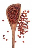 Mountain ash berries used in herbal medicine in a wooden spoon over white background.