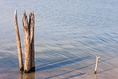 Dead Tree Stumps In Lake
