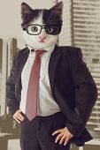 Cat Businessman