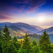 Pine Trees Near Valley In Mountains And Summer Forest On Hillside Under Blue Sky With Red Clouds At