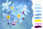 Forget-me-not Flower Color Palette