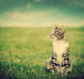 Cute cat sitting on green spring grass on sunny day. Vintage, retro style