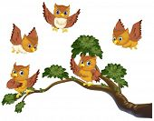 Illustration of many owls on a branch