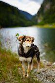 Stray Dog Near A Lake