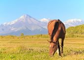 Horse Against A Volcano