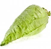 Fresh organic pointed cabbage on white background