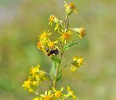 Flower In The Polar Urals.