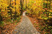 Path Through An Autumn Forest
