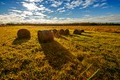 Bales Of Hay In A Field - Wide Angle