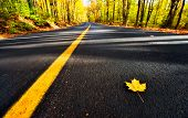 Lone Yellow Maple Leaf On The Road
