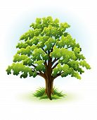 Single Oak Tree With Green Leafage