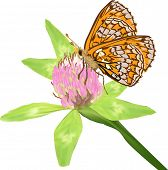 illustration with butterfly and clover in green leaves isolated on white background