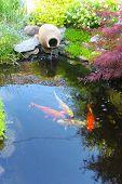 Koi fish in a small decorative pond