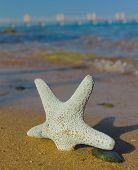 Seastar and Sunset Shade
