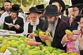 BNEI- BRAK, ISRAEL - SEPTEMBER 17, 2013: Counter with Citron. Traditional market before the holiday of Sukkot. Religious Jews in black hats and skullcaps carefully selected ritual fruits