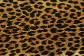 Black Leopard Spots