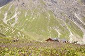 People Wading Through Flowers To Mountain Hut