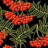 Red rowan berries seamless vector pattern. Template for design.