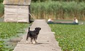 picture of schnauzer  - Miniature schnauzer standing on dock while girls sitting in boat - JPG